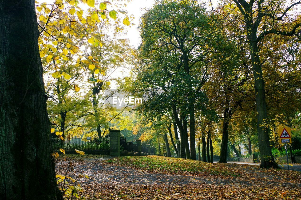 autumn, tree, change, nature, leaf, tranquility, beauty in nature, scenics, tranquil scene, branch, growth, outdoors, day, yellow, no people, the way forward, tree trunk, landscape