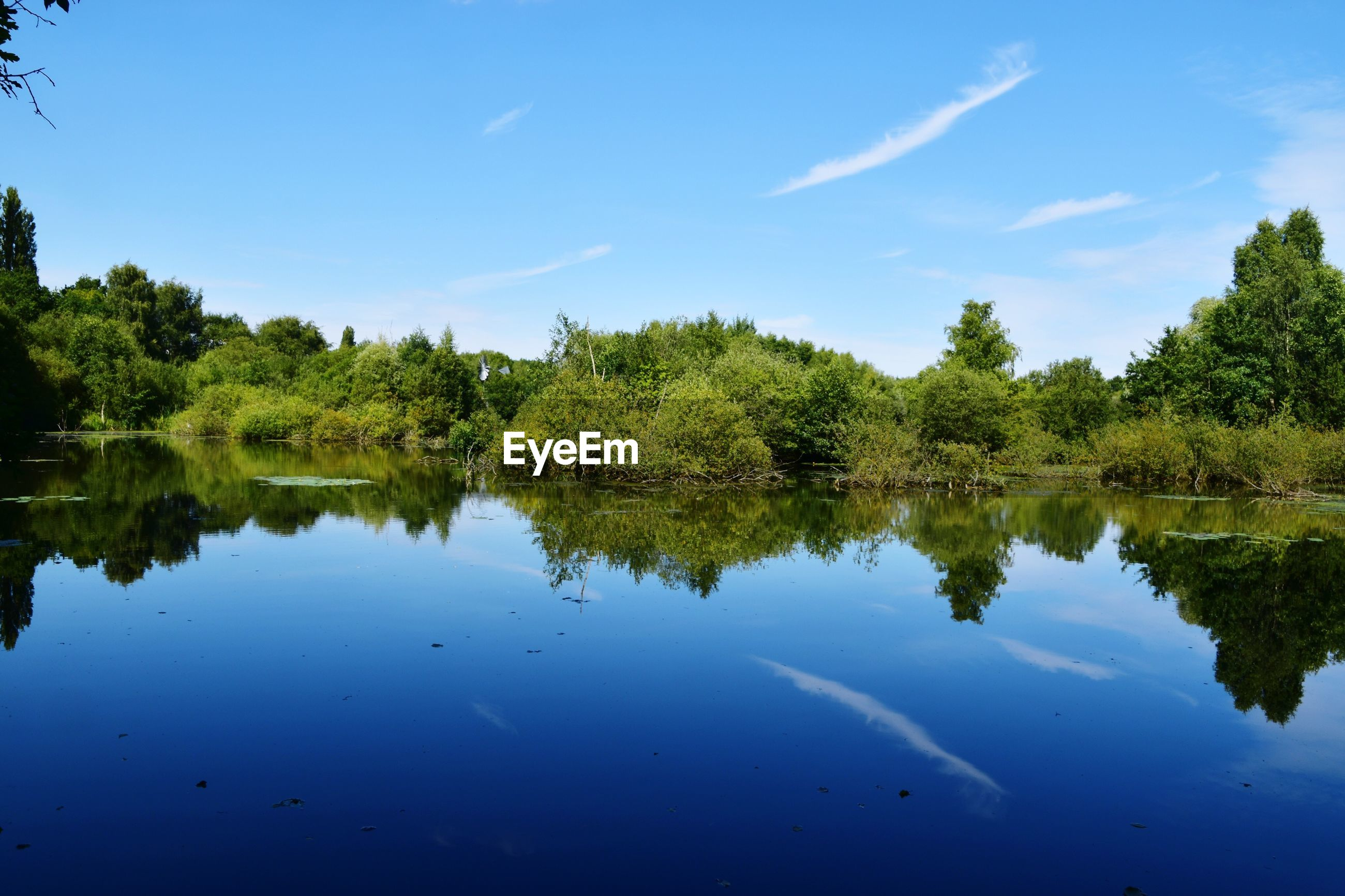 REFLECTION OF TREES ON LAKE AGAINST BLUE SKY