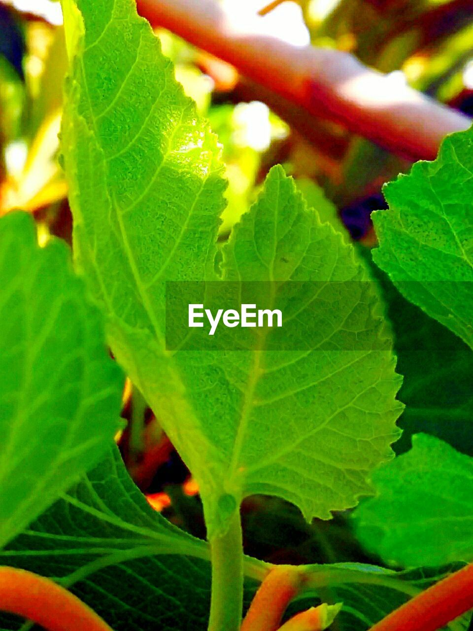 leaf, growth, green color, nature, close-up, outdoors, beauty in nature, day, freshness, fragility, no people