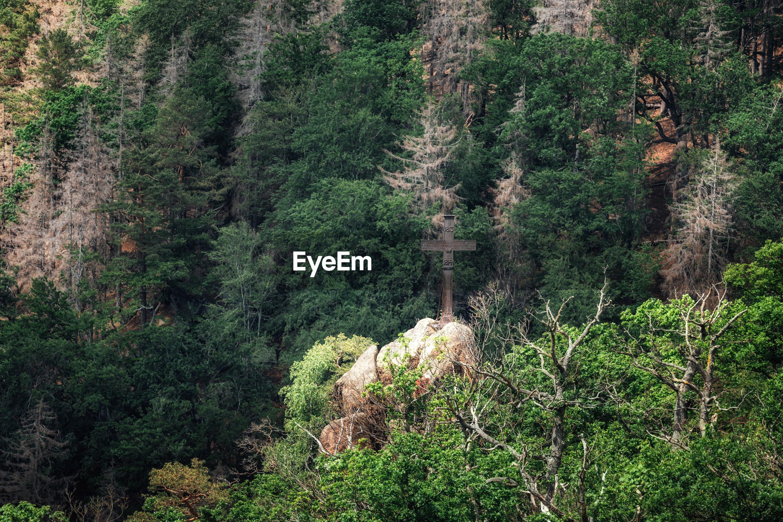 HIGH ANGLE VIEW OF PINE TREE