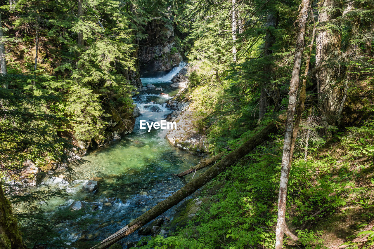 tree, plant, forest, land, water, beauty in nature, nature, scenics - nature, growth, river, rock, day, motion, no people, tranquility, lush foliage, flowing water, green color, rock - object, outdoors, flowing, stream - flowing water, rainforest, power in nature