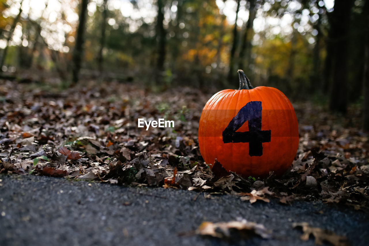 Close-up of number 4 on pumpkin at field during autumn