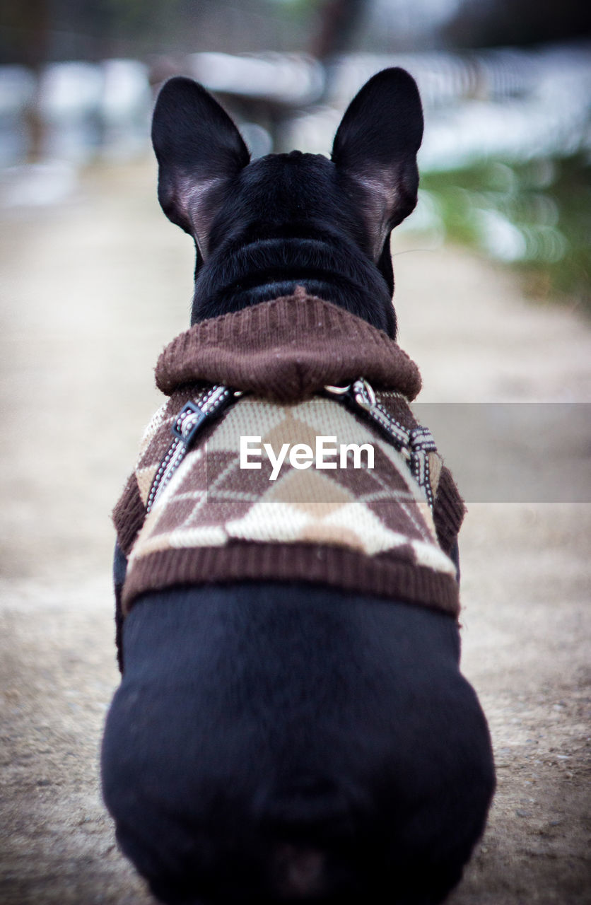Close-Up Of Dog Wearing Clothe While Sitting On Footpath