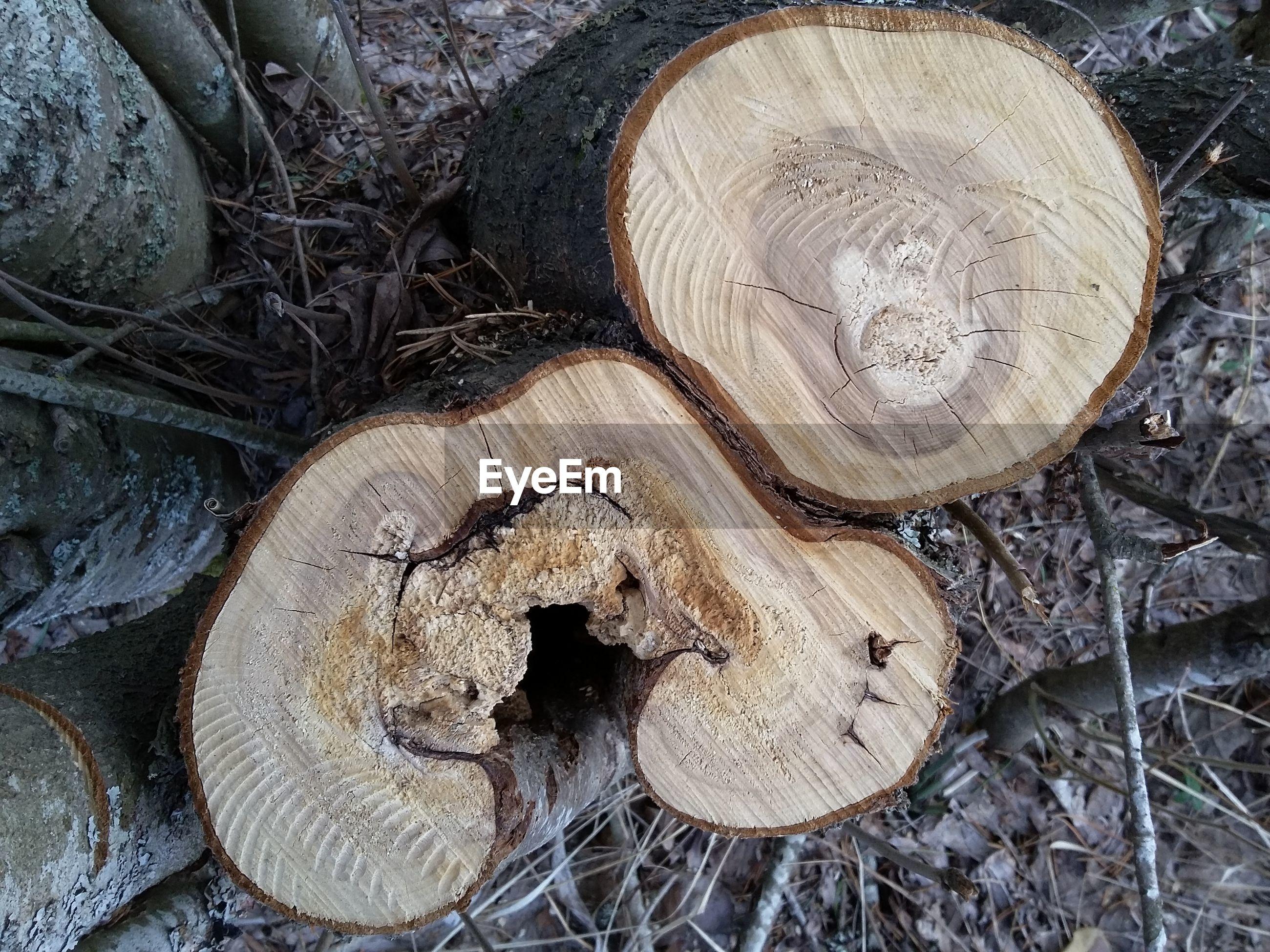 High angle view of tree stump