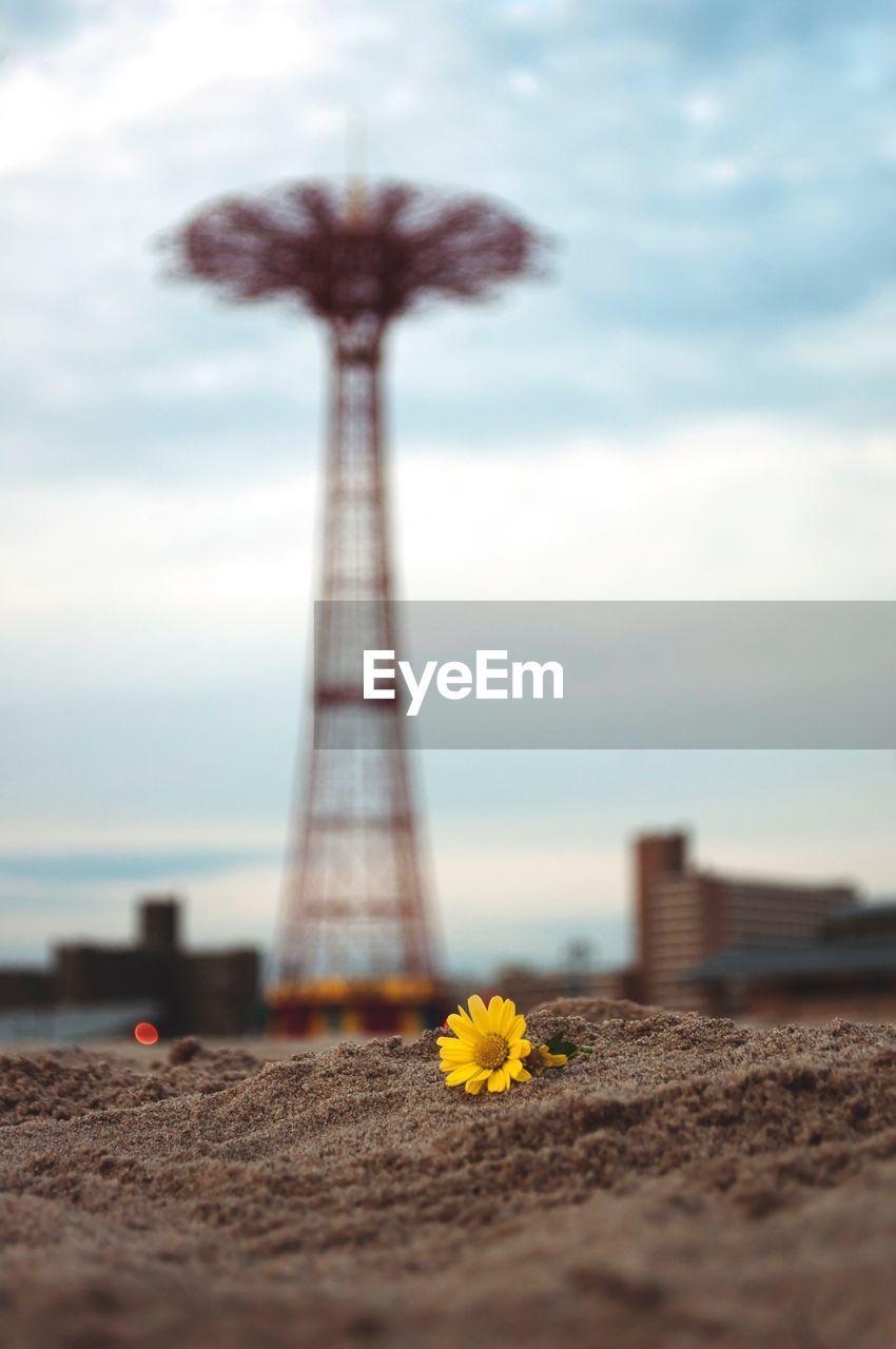 sky, cloud - sky, nature, flower, flowering plant, built structure, selective focus, architecture, no people, plant, day, land, outdoors, tall - high, travel destinations, freshness, tourism, beauty in nature, city