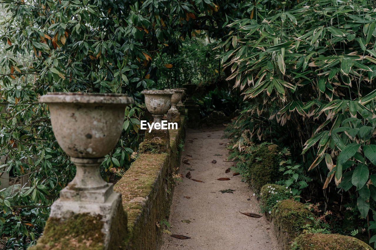 plant, growth, green color, nature, no people, tree, plant part, leaf, day, footpath, formal garden, garden, outdoors, beauty in nature, tranquility, water, direction, the way forward, land, hedge