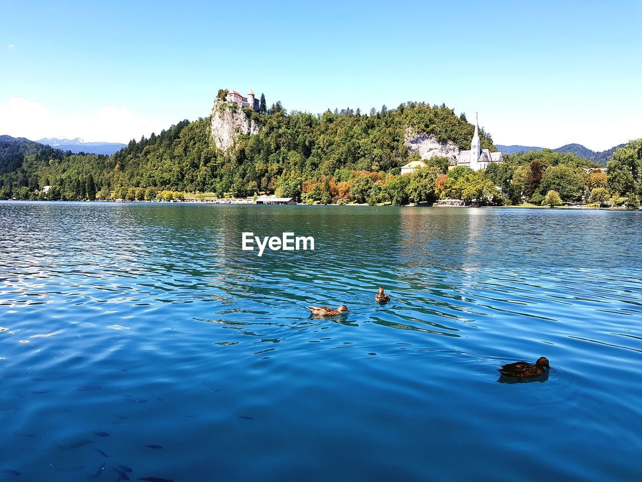 water, nature, tree, day, animal themes, no people, blue, outdoors, animals in the wild, mountain, lake, beauty in nature, swimming, waterfront, scenics, bird, sky