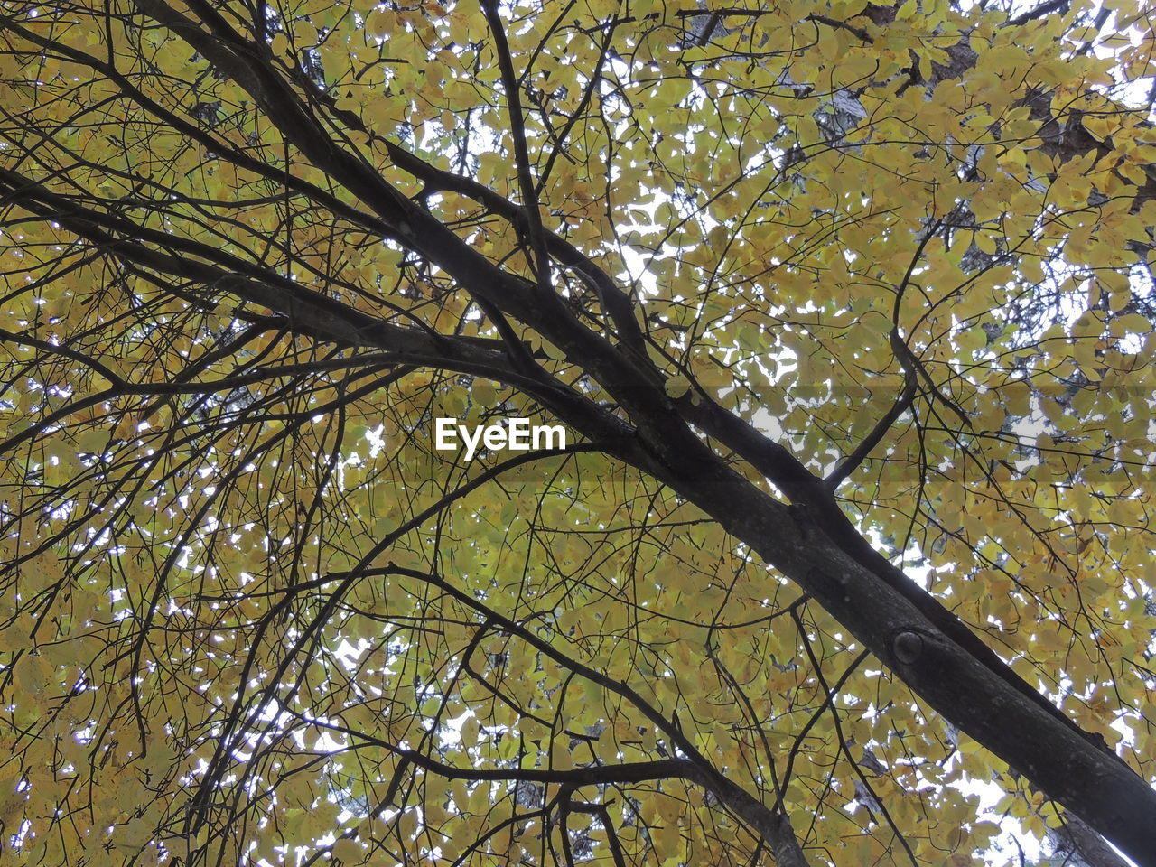 tree, low angle view, branch, nature, day, growth, forest, beauty in nature, outdoors, no people, leaf, sky