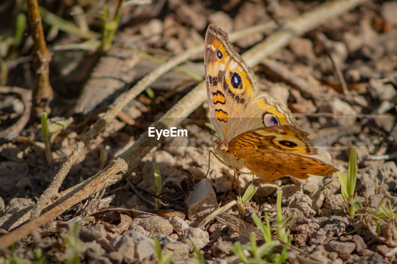 one animal, animal themes, animals in the wild, animal wildlife, animal, nature, invertebrate, close-up, land, no people, field, day, insect, selective focus, plant part, leaf, beauty in nature, plant, animal wing, outdoors, butterfly - insect, butterfly