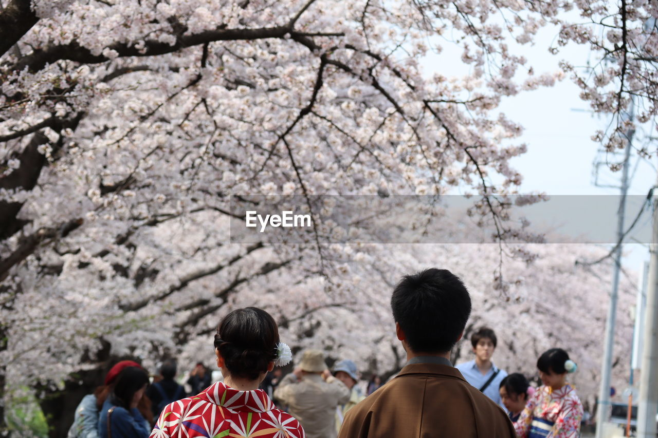 group of people, tree, rear view, plant, men, women, cherry blossom, real people, cherry tree, togetherness, lifestyles, blossom, day, leisure activity, nature, flower, flowering plant, adult, people, focus on foreground, springtime, outdoors