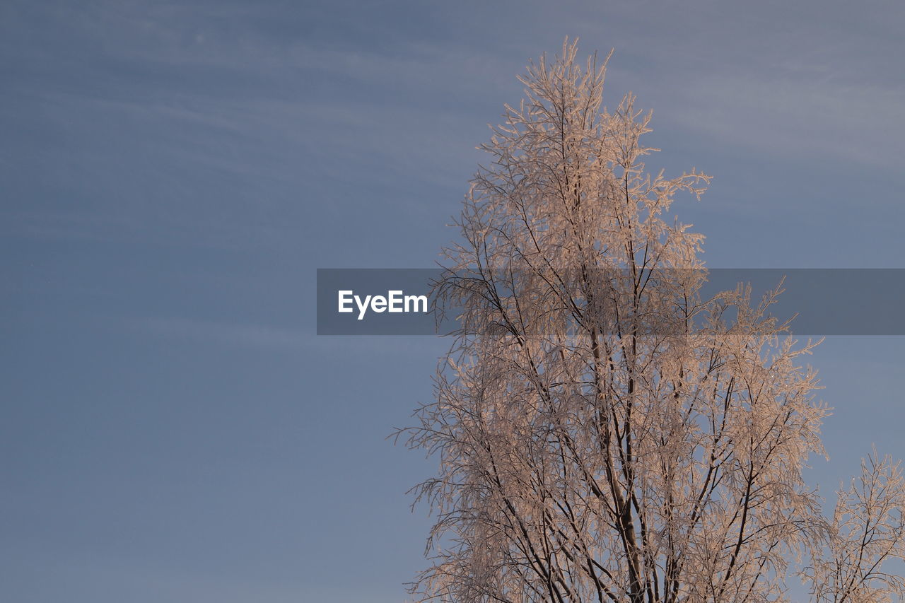 bare tree, branch, tree, nature, beauty in nature, day, tranquility, no people, outdoors, sky