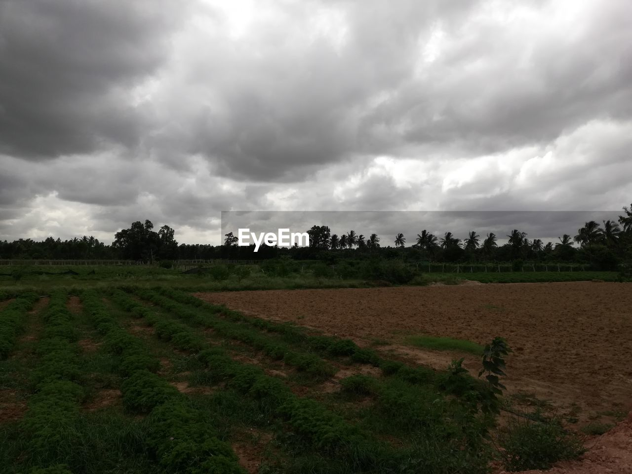cloud - sky, sky, landscape, environment, plant, land, field, scenics - nature, tree, tranquil scene, tranquility, beauty in nature, nature, rural scene, agriculture, no people, growth, day, overcast, outdoors, ominous