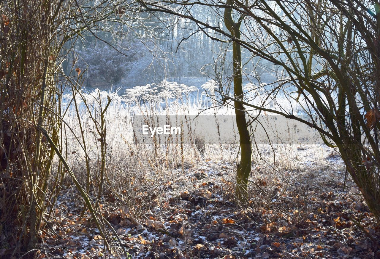 tree, plant, land, tranquility, forest, nature, no people, day, beauty in nature, branch, tranquil scene, winter, bare tree, growth, cold temperature, non-urban scene, scenics - nature, outdoors, woodland