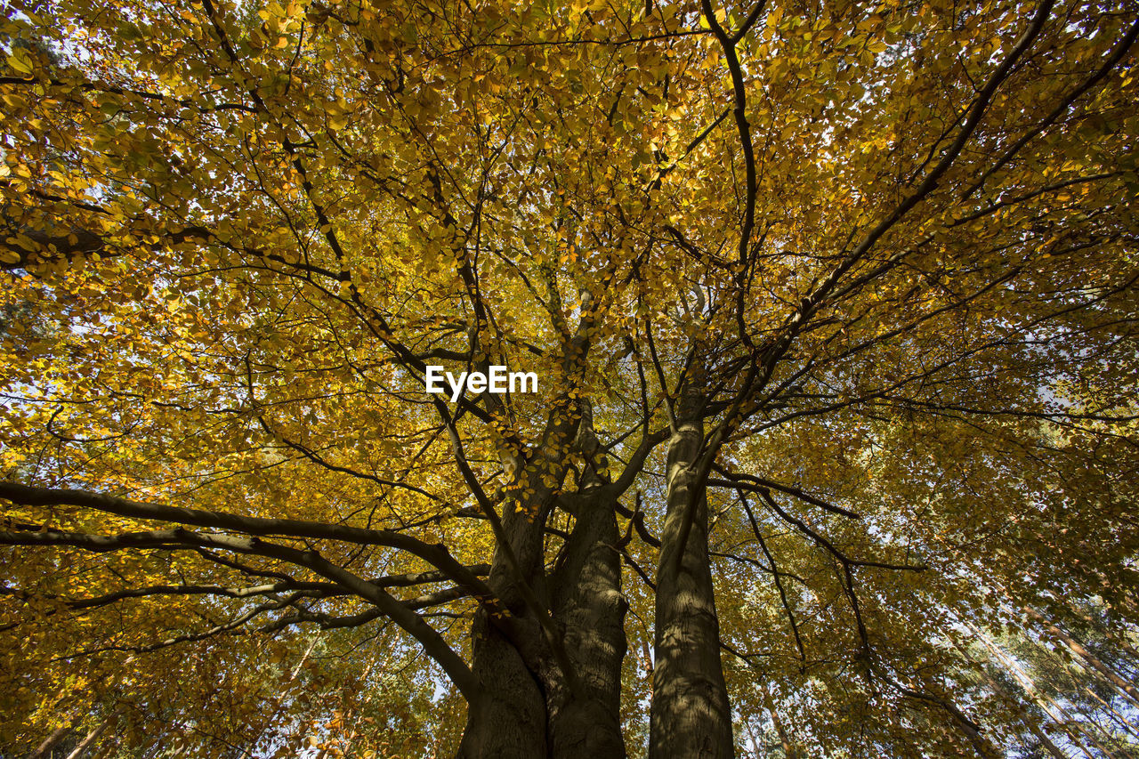 tree, autumn, plant, low angle view, change, no people, beauty in nature, nature, branch, plant part, growth, tree trunk, leaf, day, trunk, outdoors, tree canopy, tranquility, full frame, backgrounds, fall