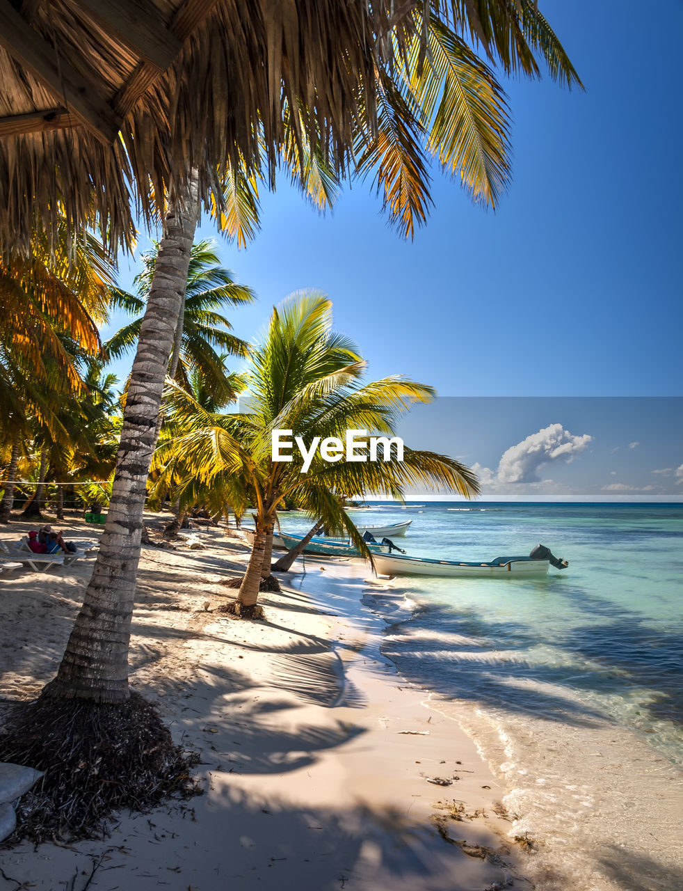 PALM TREES ON BEACH AGAINST SEA
