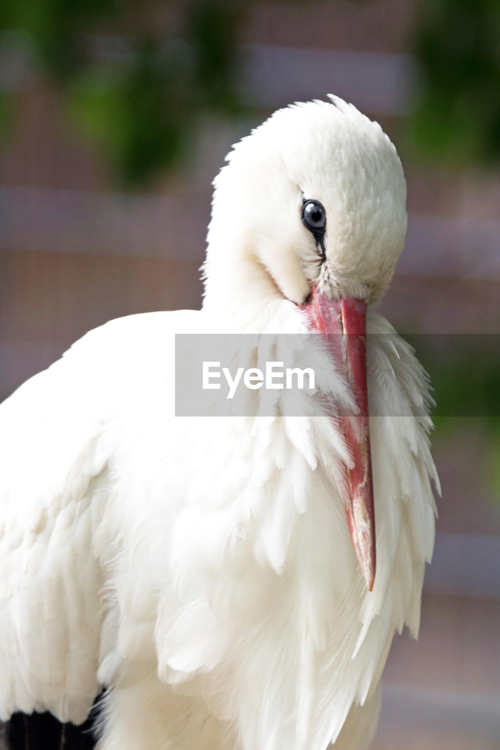 CLOSE-UP OF A WHITE BIRD