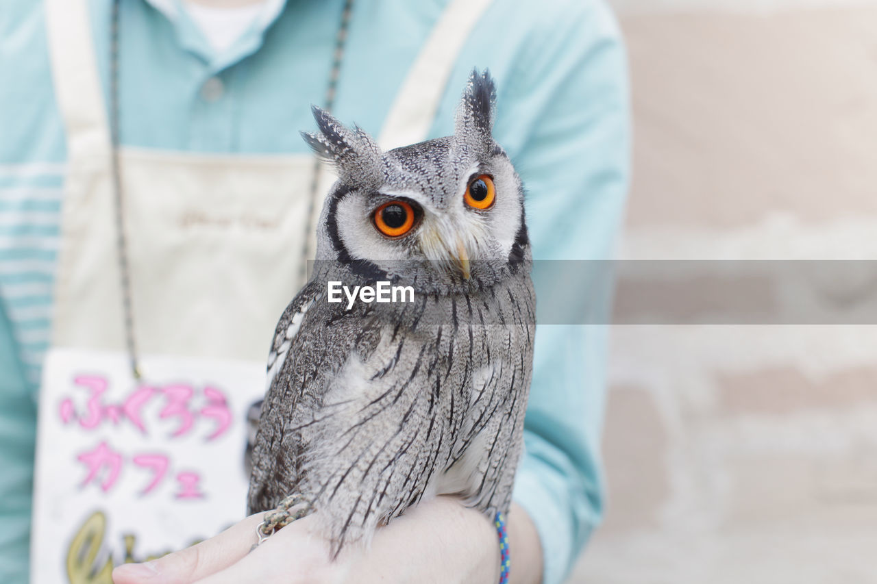 one animal, animal themes, close-up, one person, human hand, indoors, human body part, pets, day, bird, owl, domestic animals, mammal