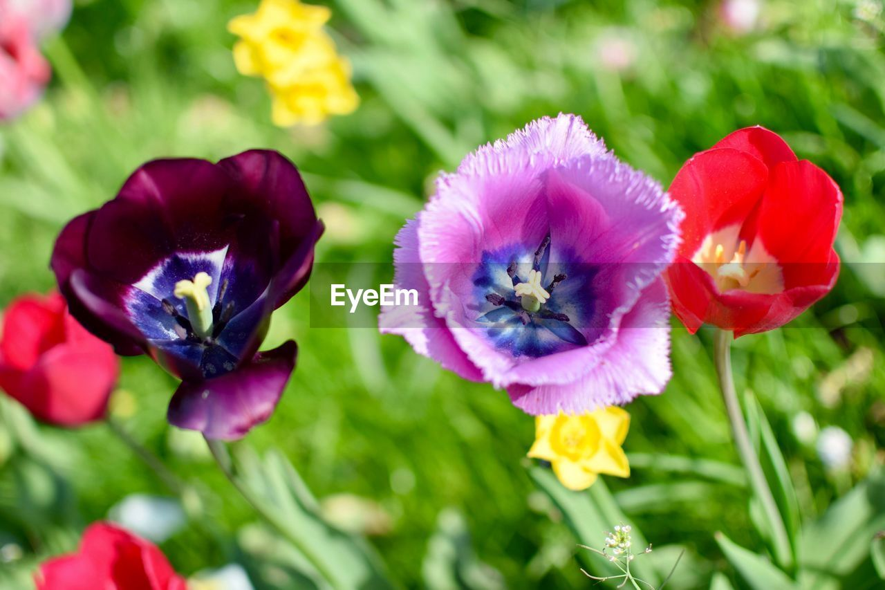 flowering plant, flower, plant, fragility, vulnerability, petal, beauty in nature, freshness, growth, flower head, inflorescence, close-up, nature, day, pansy, focus on foreground, no people, green color, purple, selective focus
