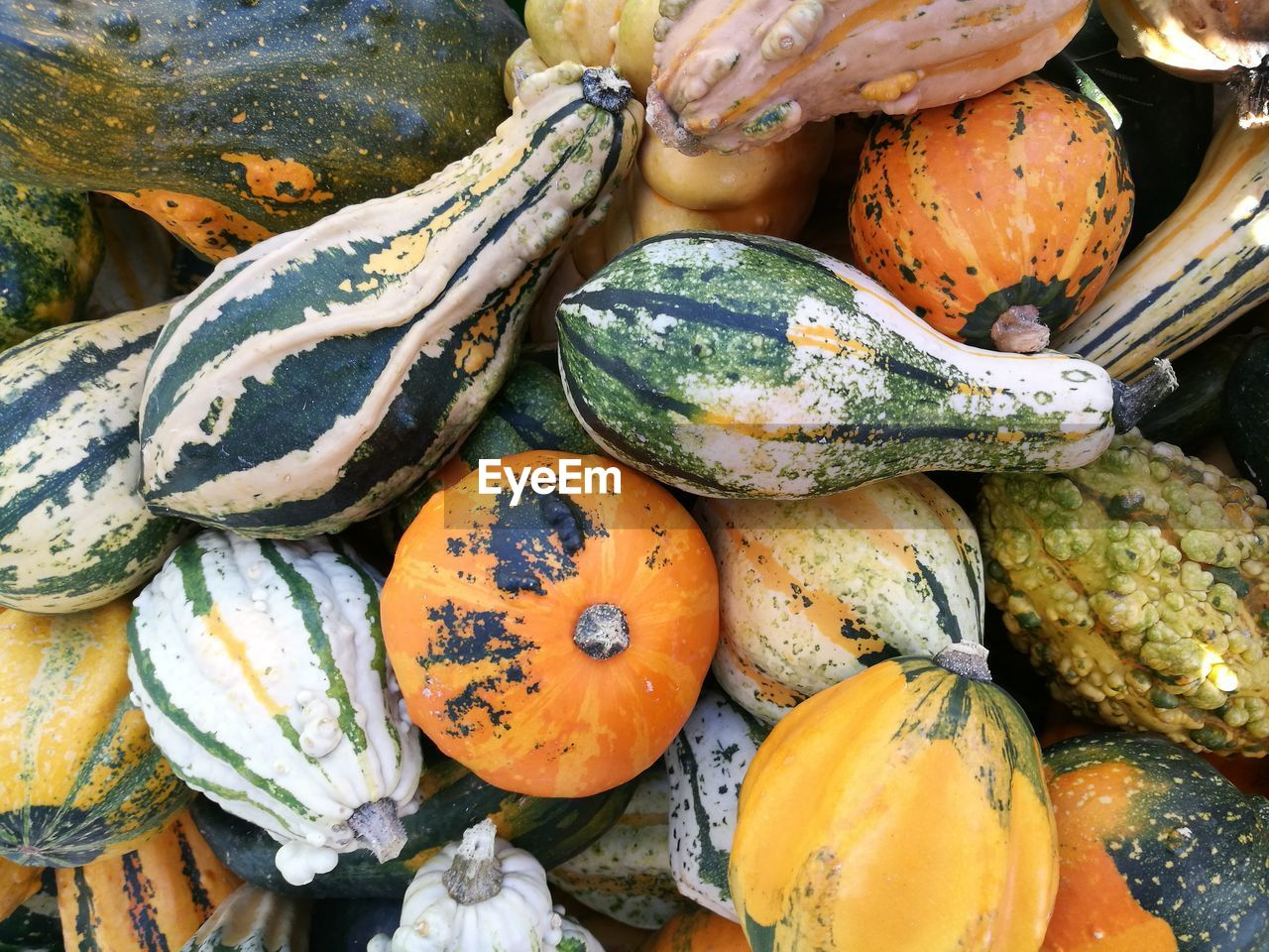 food and drink, healthy eating, food, wellbeing, freshness, market, pumpkin, large group of objects, vegetable, for sale, high angle view, retail, market stall, backgrounds, choice, day, still life, squash - vegetable, full frame, variation, no people, gourd, organic, outdoors