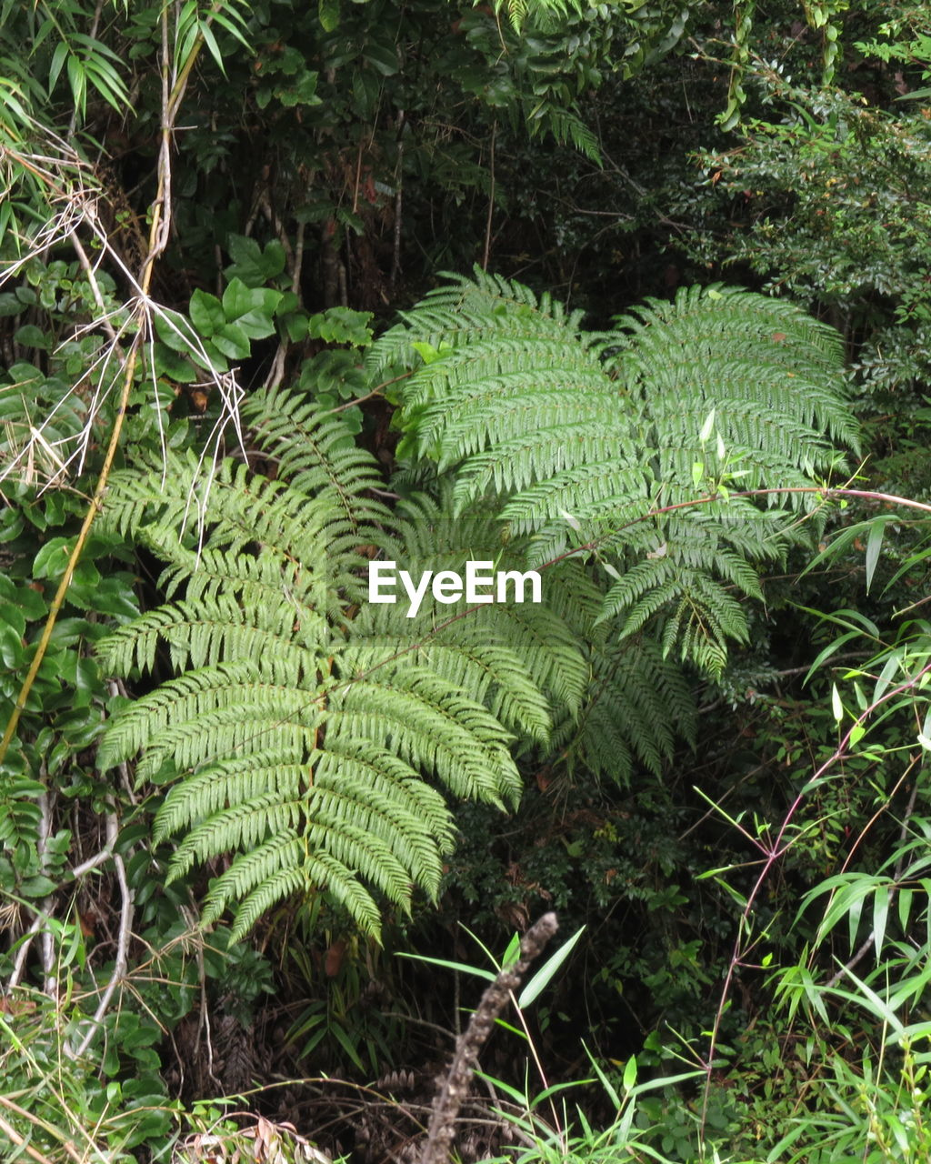 nature, growth, plant, green, fern, day, beauty in nature, green color, forest, no people, leaf, outdoors, close-up, freshness