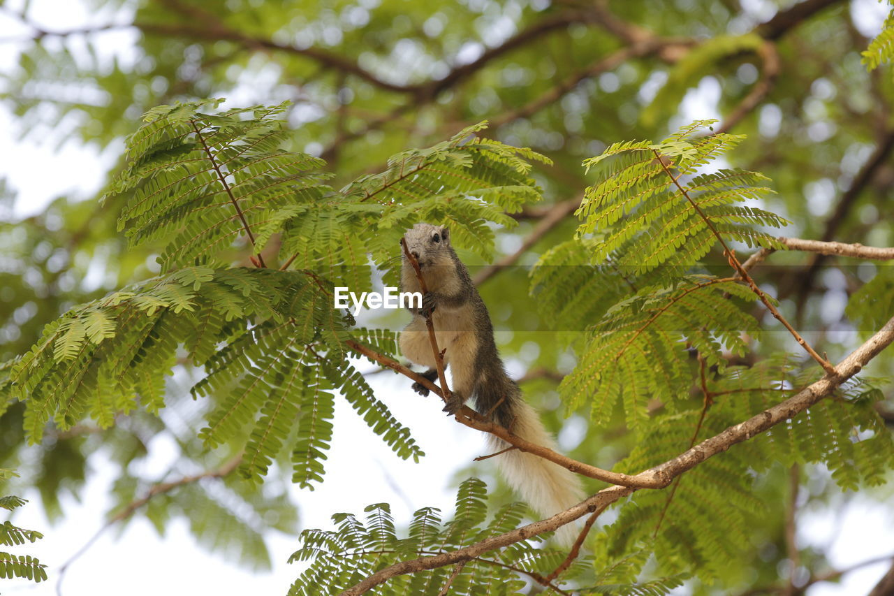 tree, plant, animal themes, animal wildlife, animal, low angle view, green color, branch, animals in the wild, one animal, vertebrate, day, no people, nature, focus on foreground, growth, selective focus, leaf, plant part, outdoors