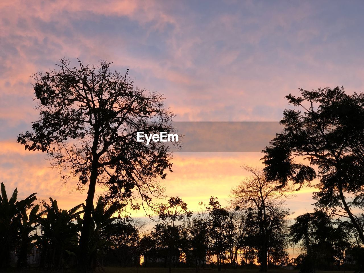 tree, sunset, sky, plant, silhouette, beauty in nature, tranquility, orange color, scenics - nature, cloud - sky, tranquil scene, growth, no people, nature, idyllic, non-urban scene, outdoors, low angle view, branch, dramatic sky, romantic sky