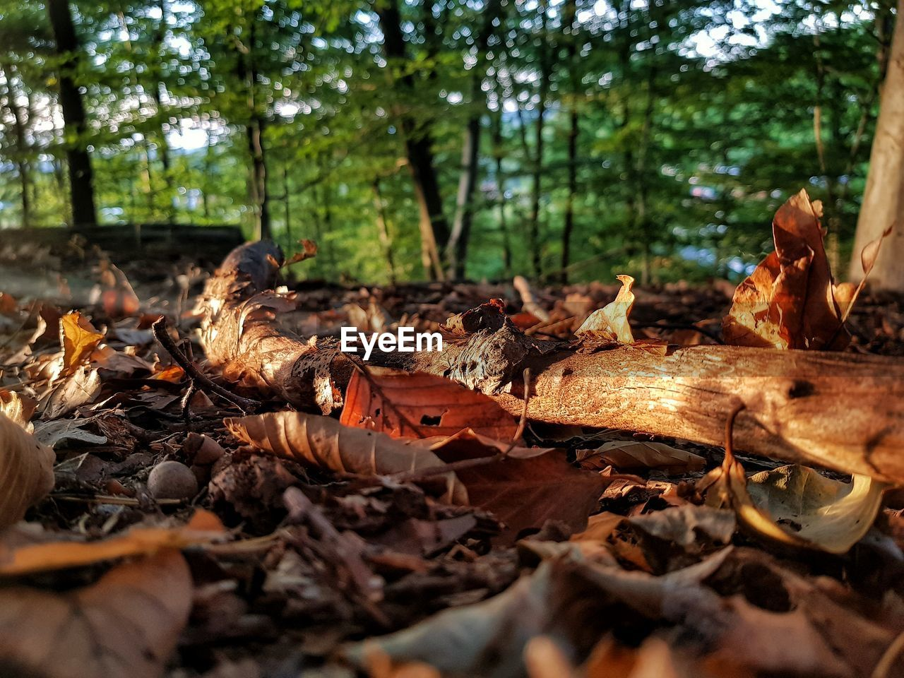 land, leaf, plant part, nature, leaves, autumn, forest, tree, dry, selective focus, day, falling, no people, plant, change, field, outdoors, sunlight, close-up, wood - material, surface level, dried