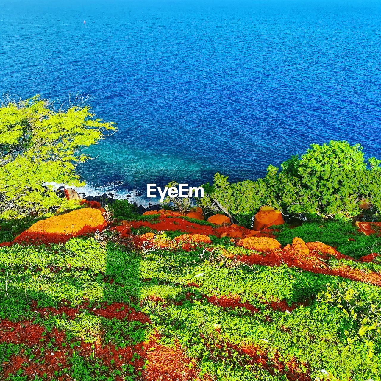 beauty in nature, plant, water, scenics - nature, tranquility, tranquil scene, sea, green color, high angle view, growth, day, nature, no people, land, blue, grass, tree, beach, idyllic, outdoors, horizon over water