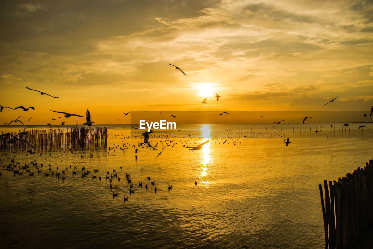 sunset, bird, sky, water, vertebrate, group of animals, animals in the wild, animal, cloud - sky, animal themes, animal wildlife, beauty in nature, large group of animals, silhouette, sea, scenics - nature, flying, orange color, waterfront, horizon over water, flock of birds, outdoors, seagull