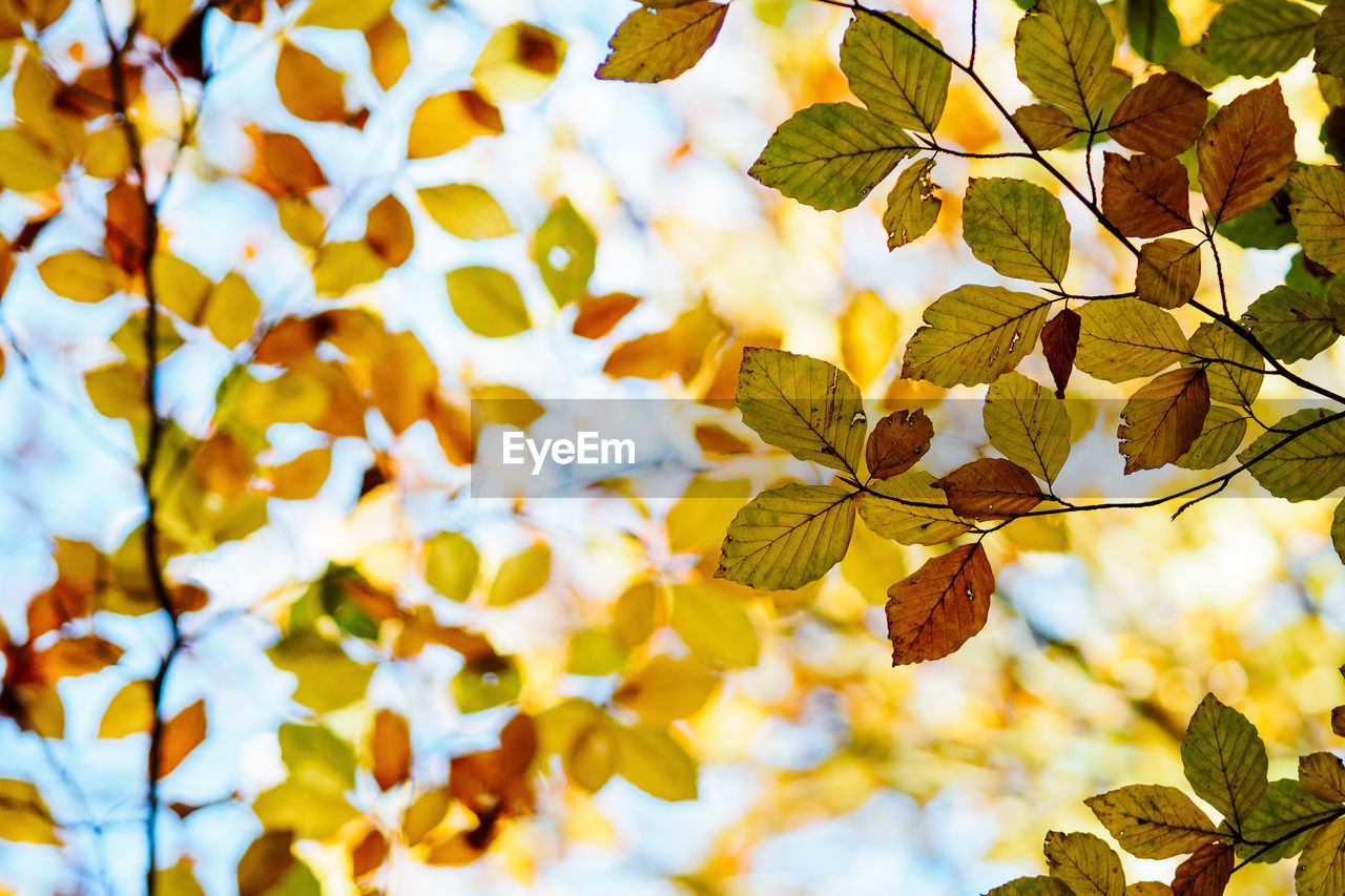 leaf, nature, branch, growth, tree, beauty in nature, day, no people, autumn, outdoors, close-up, sky, fragility, flower, freshness