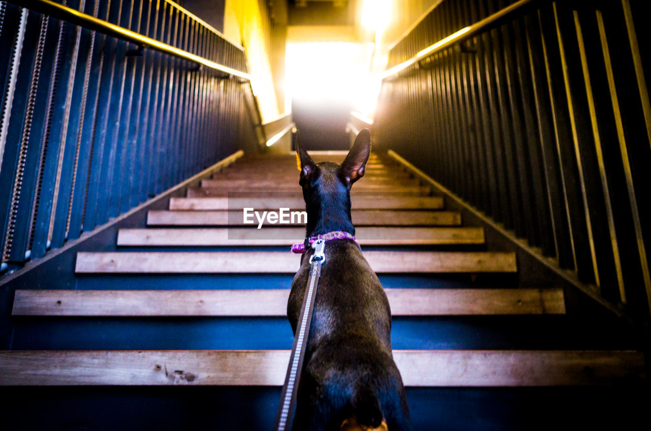 High angle view of dog standing on stairs