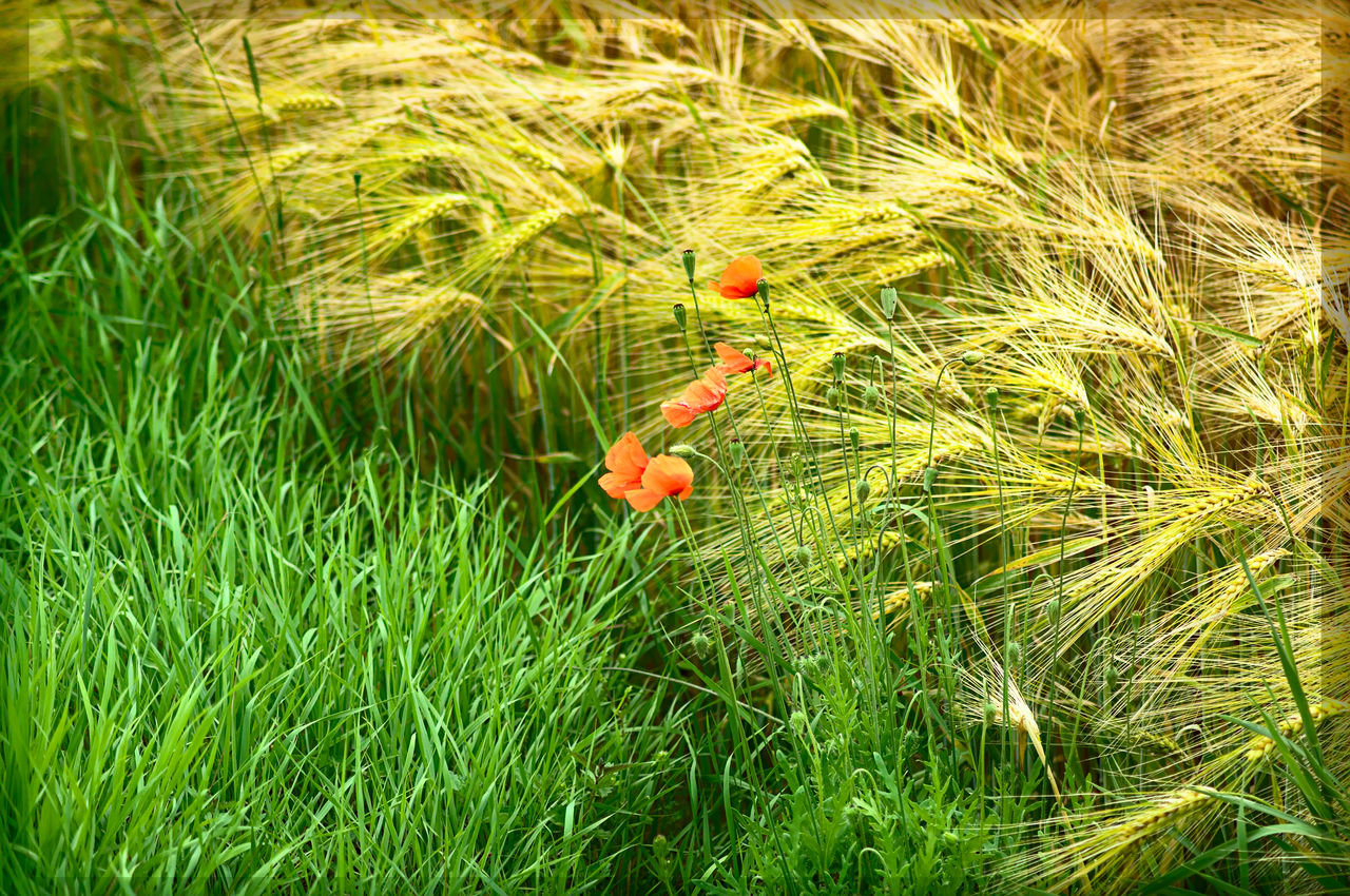plant, animal themes, growth, animals in the wild, nature, animal wildlife, green color, animal, land, grass, day, vertebrate, no people, beauty in nature, field, one animal, outdoors, bird, flower, orange color