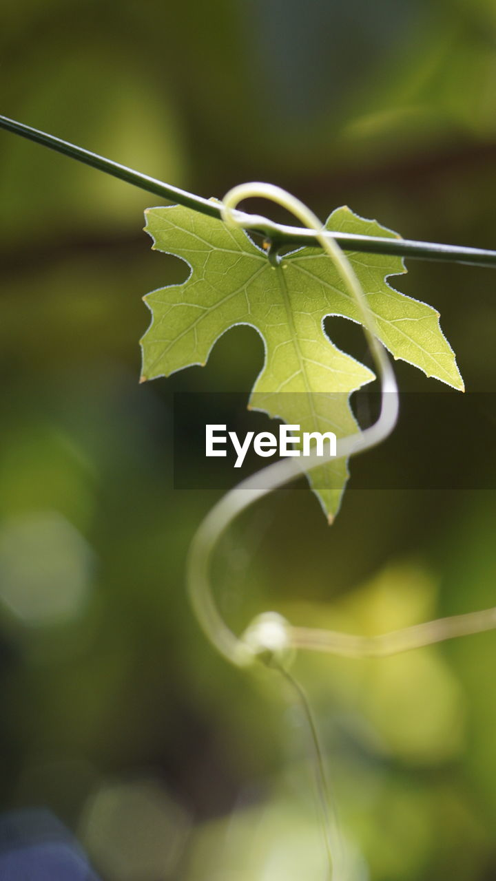 leaf, growth, close-up, nature, day, focus on foreground, plant, no people, green color, outdoors, fragility, beauty in nature, freshness