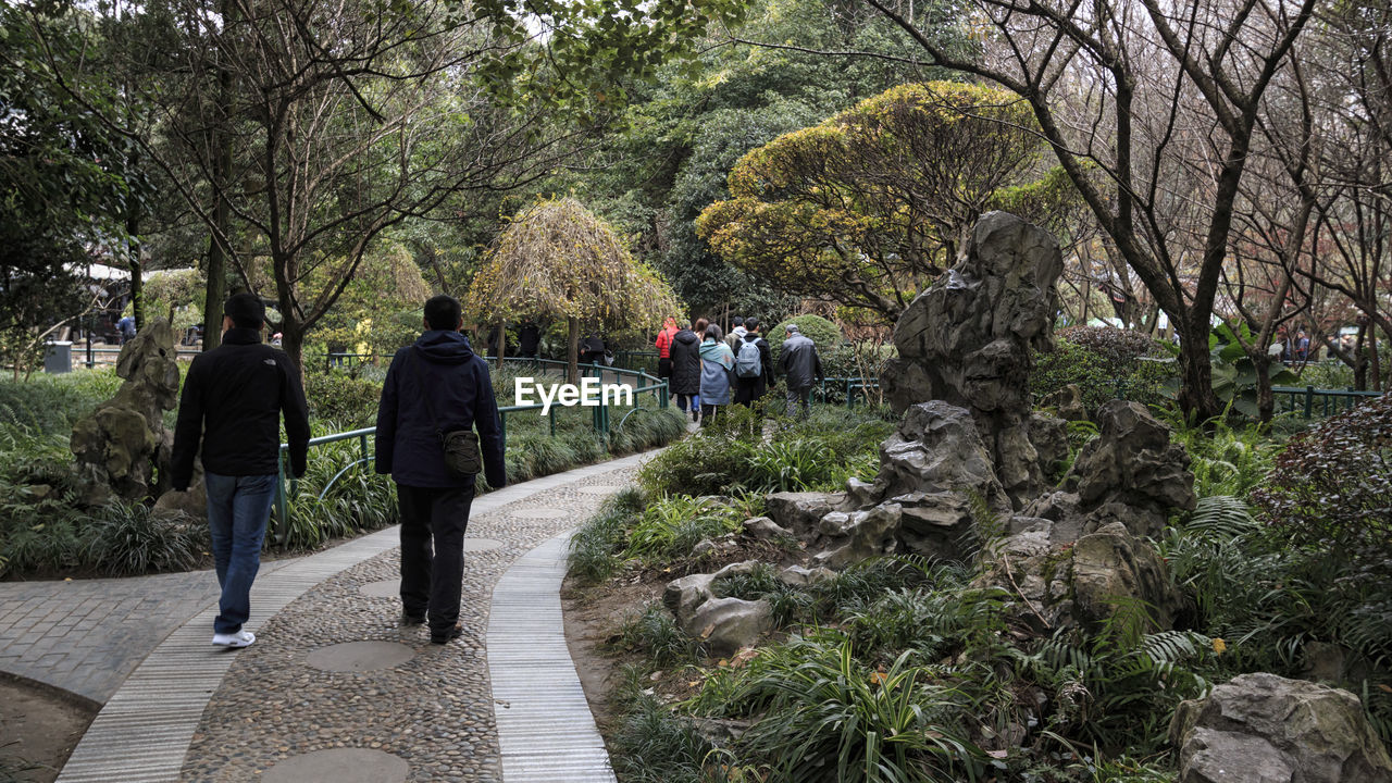 tree, plant, rear view, walking, real people, nature, footpath, men, group of people, lifestyles, growth, leisure activity, women, people, full length, adult, day, direction, the way forward, outdoors