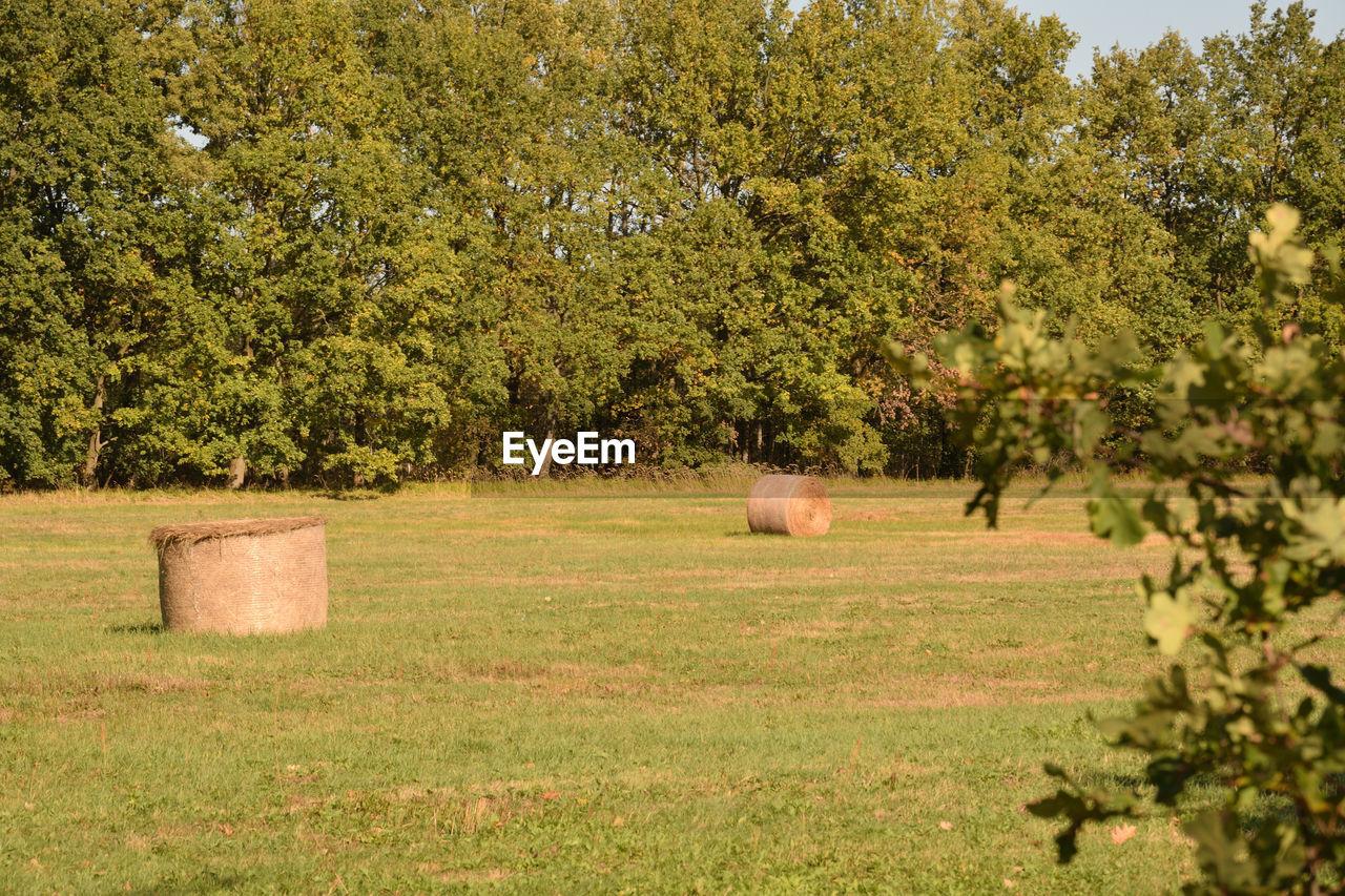 Hay Bales On Field Against Trees