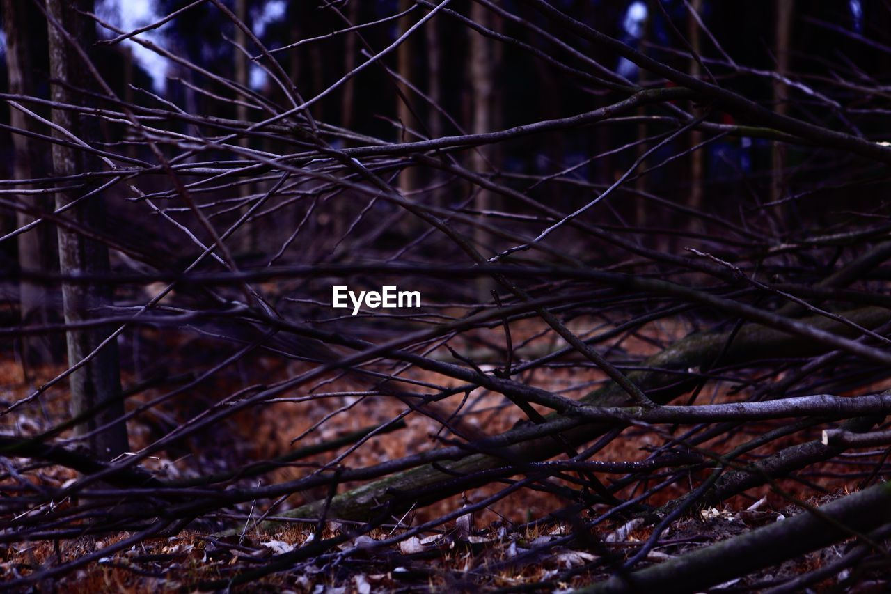 night, tangled, no people, forest, outdoors, branch, nature, complexity, close-up, tree
