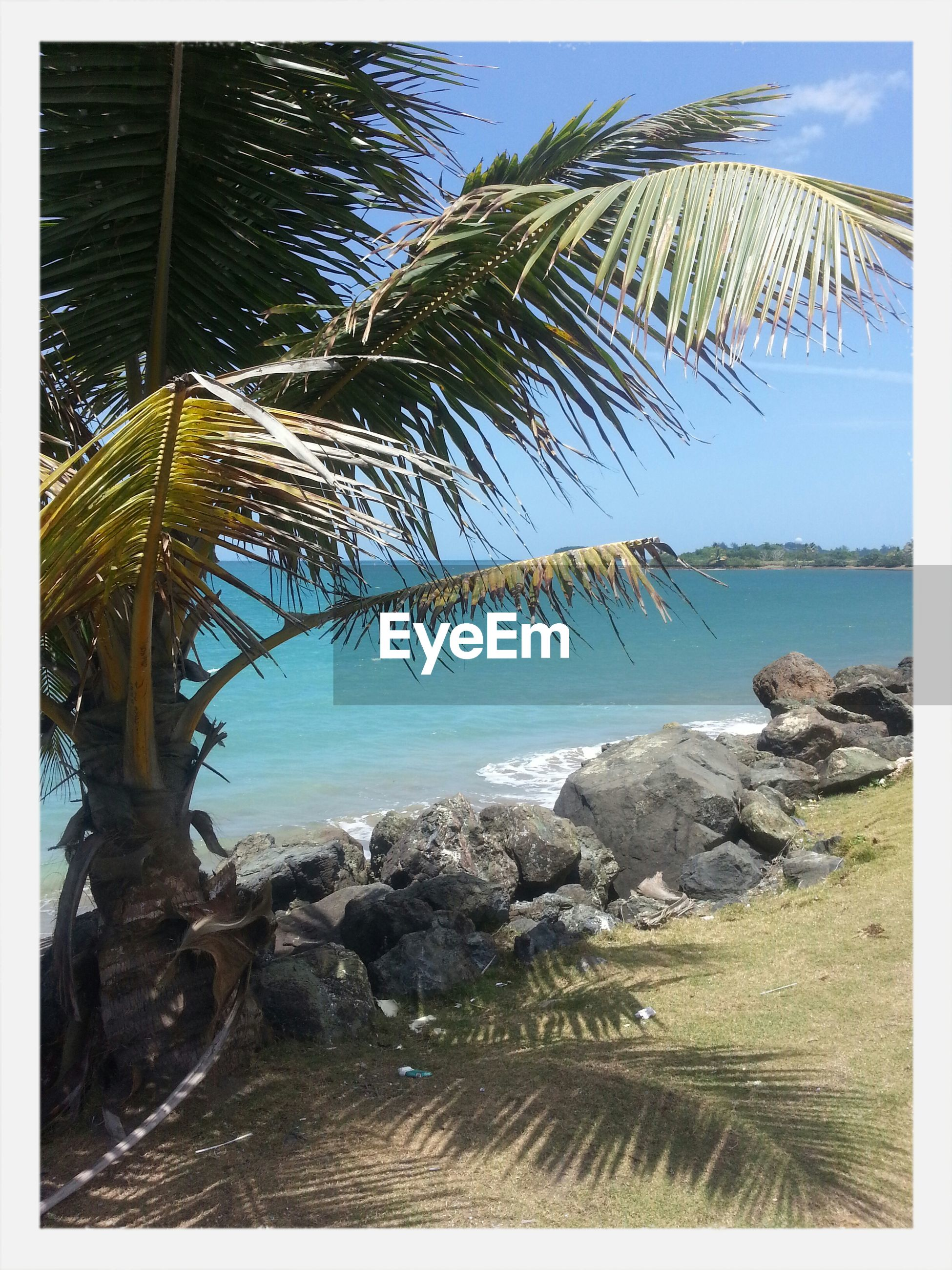 transfer print, sea, water, auto post production filter, tranquility, scenics, tranquil scene, tree, sky, nature, beach, horizon over water, beauty in nature, blue, shore, rock - object, day, palm tree, coastline, outdoors