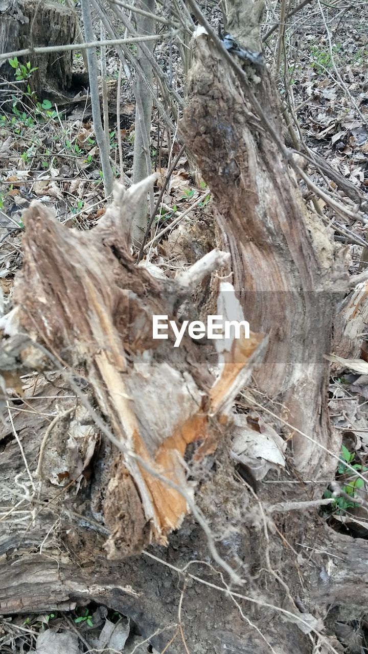 nature, no people, day, outdoors, tree, tree trunk, forest, close-up, dead tree