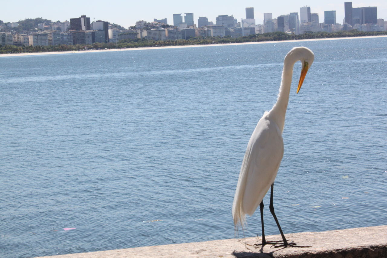 water, animal themes, one animal, animals in the wild, bird, day, outdoors, building exterior, sea, animal wildlife, no people, nature, architecture, built structure, skyscraper, city, cityscape