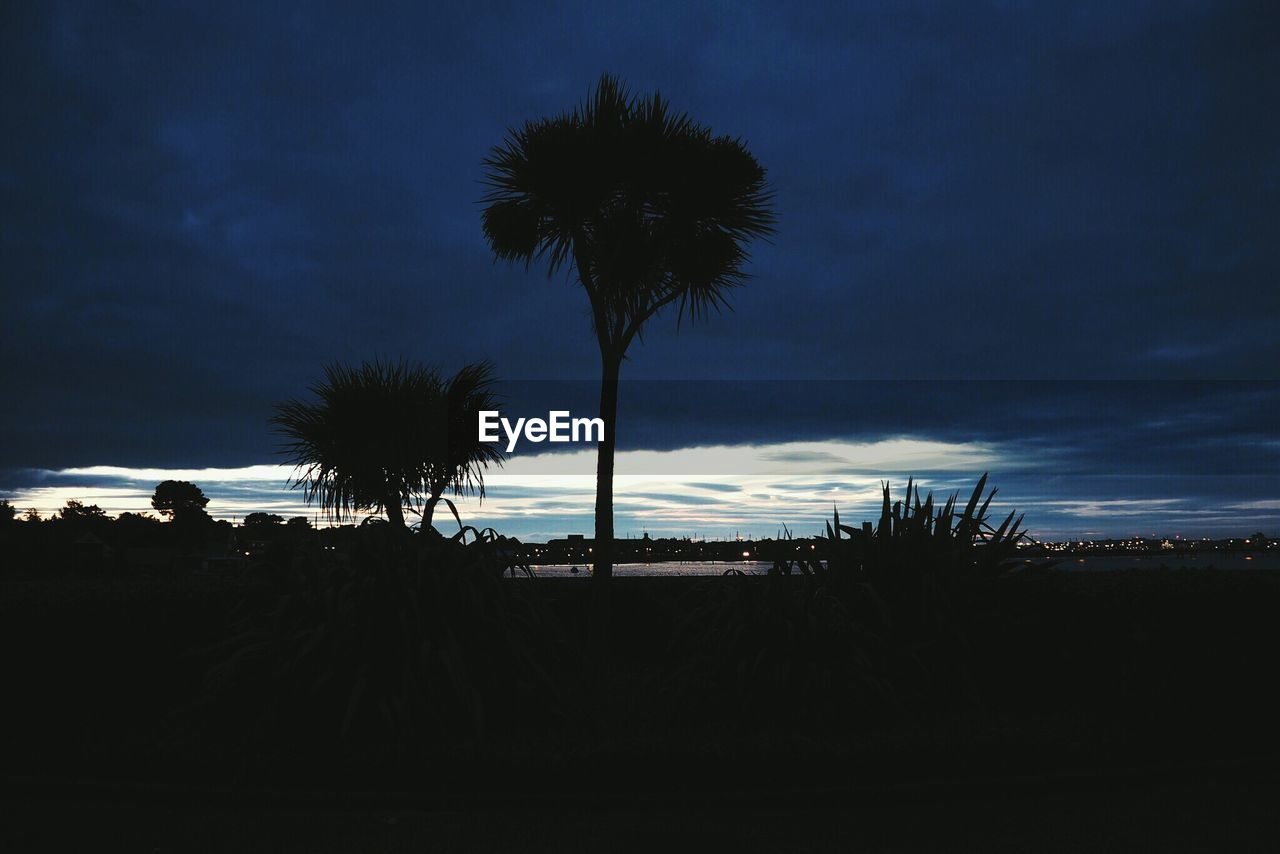 palm tree, silhouette, tree, sky, tree trunk, outdoors, tranquil scene, beauty in nature, tranquility, nature, growth, scenics, sunset, beach, no people, day