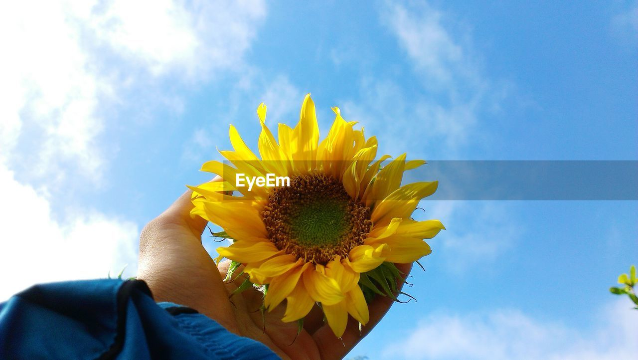 Cropped hand of person holding sunflower against sky