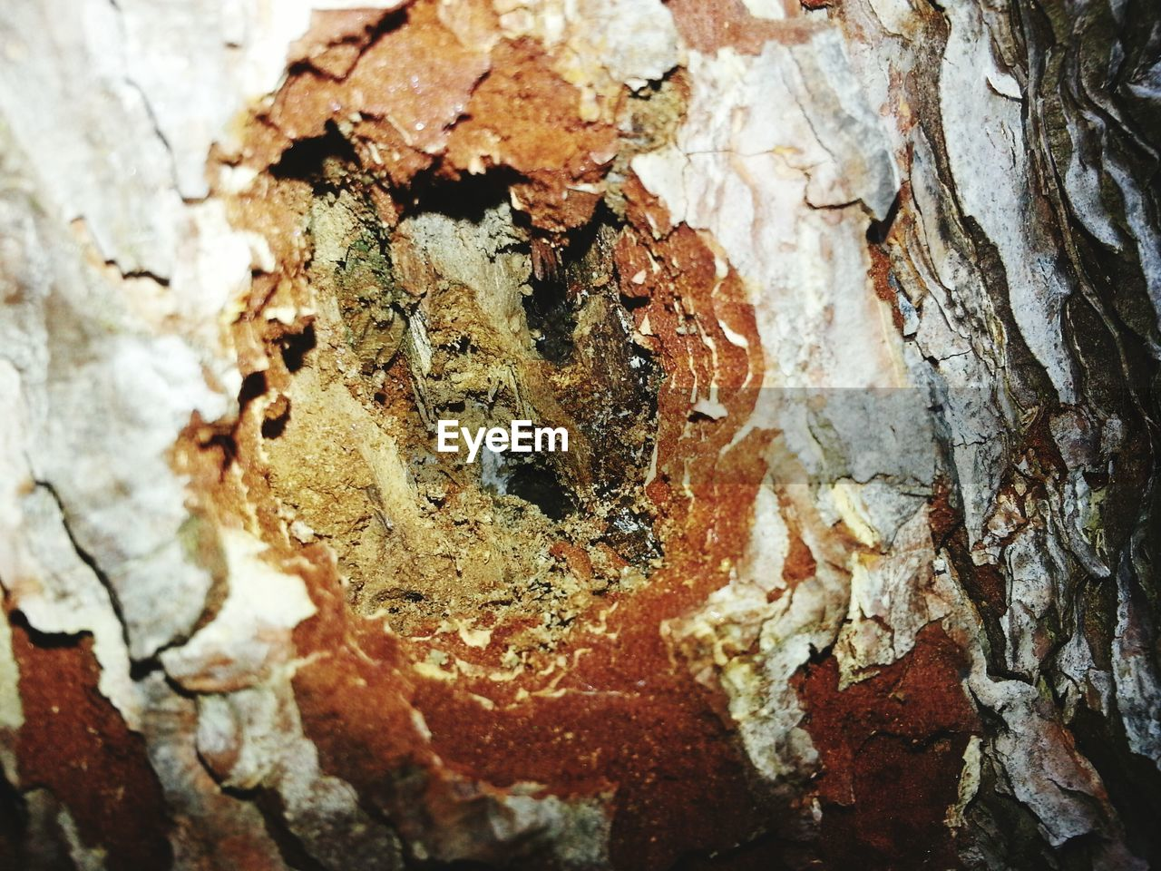 close-up, textured, no people, tree trunk, day, nature, outdoors, animal themes