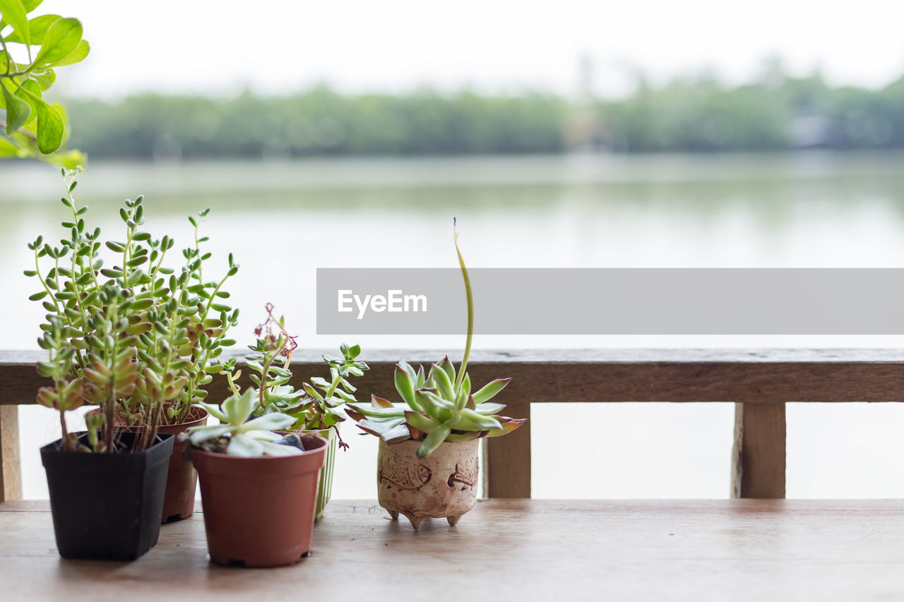 potted plant, plant, growth, nature, beauty in nature, focus on foreground, no people, day, water, green color, outdoors, close-up, railing, leaf, plant part, table, freshness, lake, flower pot, houseplant