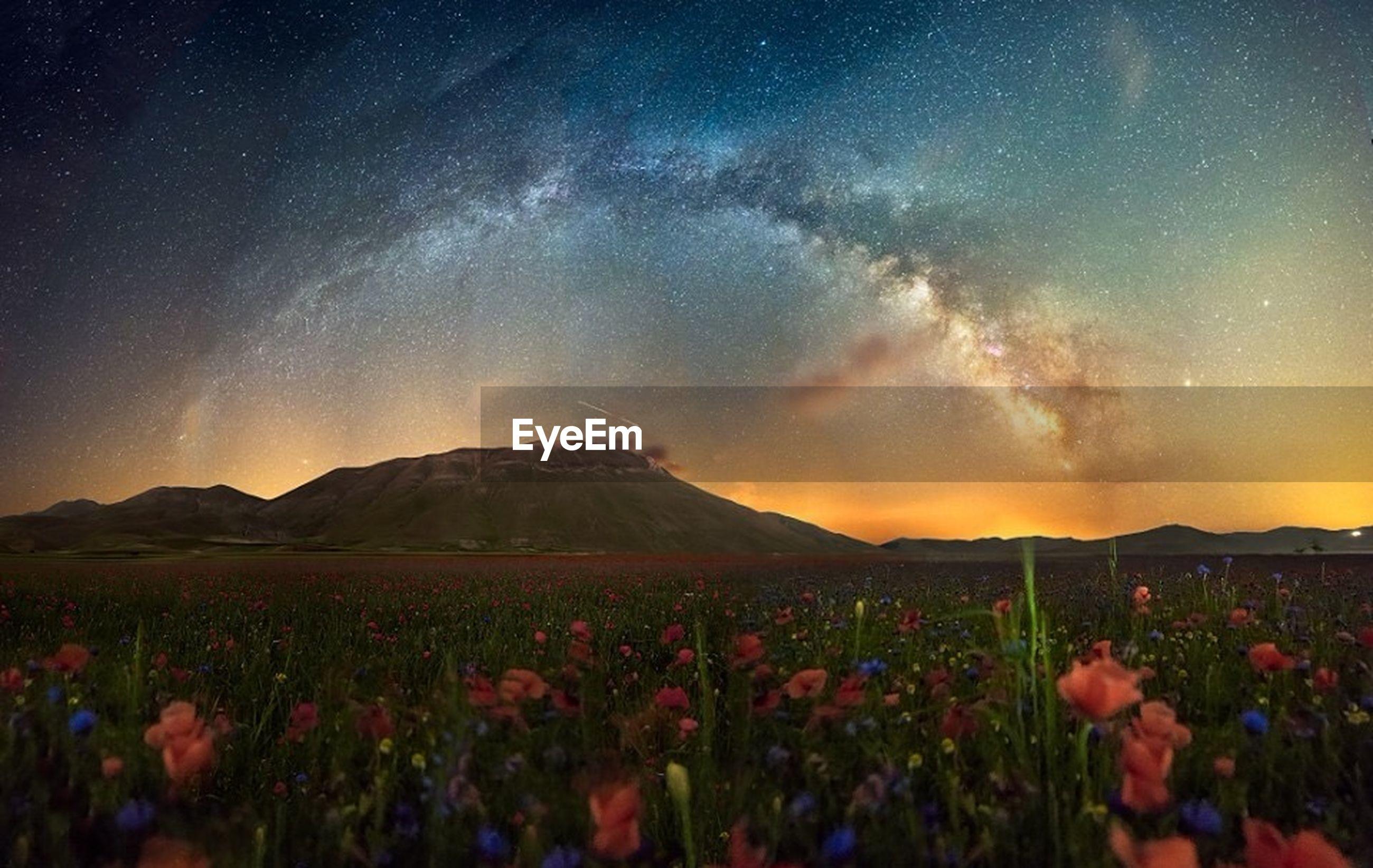 Flowers blooming on field against sky