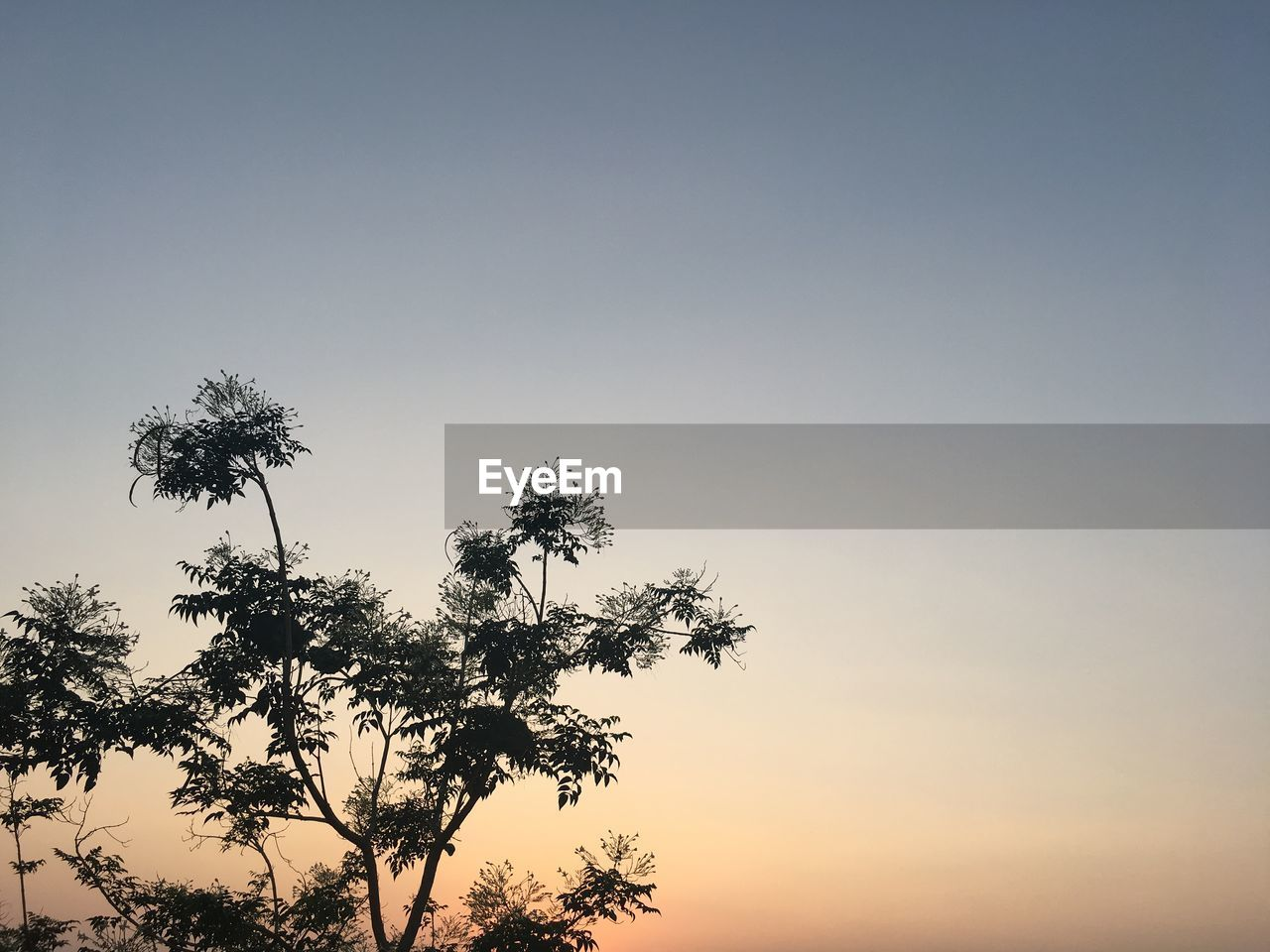 sky, tree, plant, beauty in nature, sunset, growth, tranquility, nature, no people, scenics - nature, low angle view, copy space, silhouette, clear sky, outdoors, palm tree, tropical climate, tranquil scene, day, non-urban scene