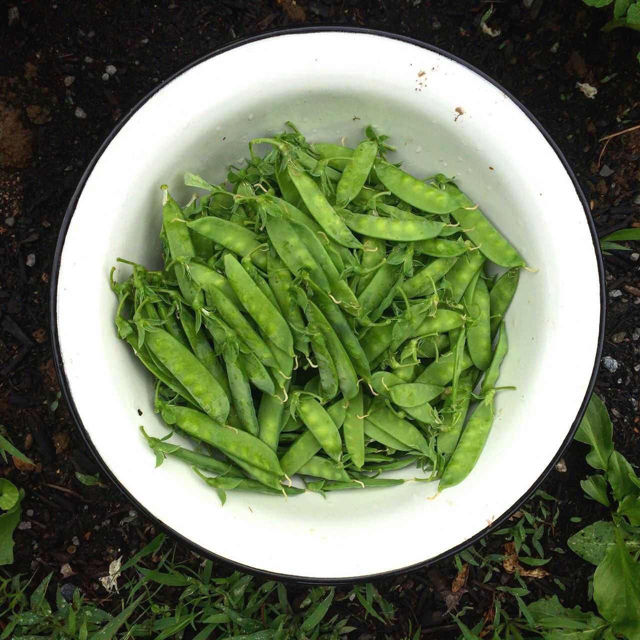 Close-up of peas in bowl