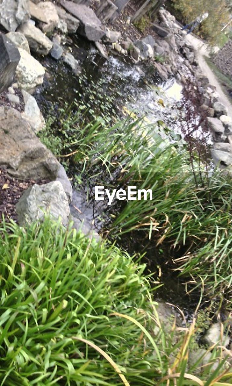 nature, water, green color, outdoors, no people, growth, plant, day, rock - object, grass, tranquility, beauty in nature, waterfall, freshness, close-up
