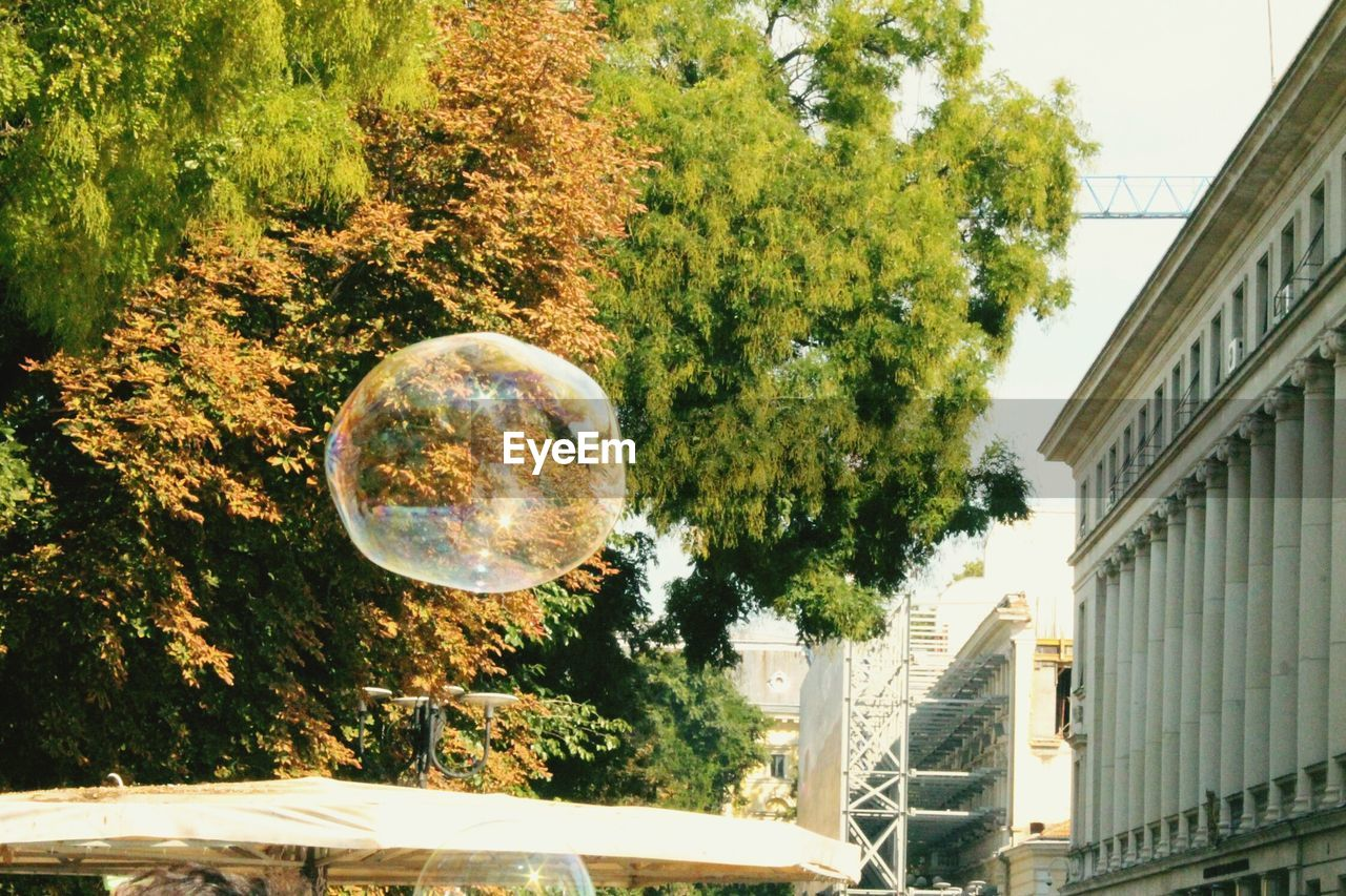 tree, built structure, architecture, no people, bubble, day, building exterior, outdoors, fragility, growth, nature, close-up, sky