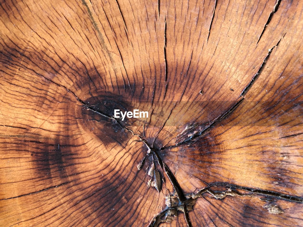 wood - material, backgrounds, textured, brown, full frame, close-up, pattern, no people, wood, tree ring, cracked, wood grain, tree, tree stump, cross section, nature, extreme close-up, natural pattern, day, plant, bark, concentric, textured effect