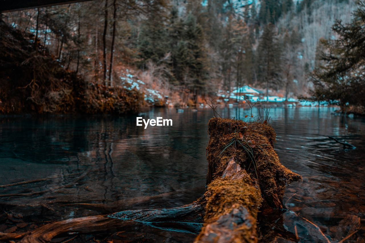 water, tree, tranquility, nature, lake, tranquil scene, plant, reflection, beauty in nature, trunk, tree trunk, forest, scenics - nature, day, no people, land, outdoors, wood - material, focus on foreground, wood, bark